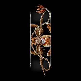 Powell Peralta Flight® Skateboard Deck BISS Marion Moth - Shape 243 - 8.25x 31.95