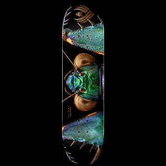Powell Peralta Flight® Skateboard Deck BISS Bark Mantis - Shape 245 - 8.75 x 32.95
