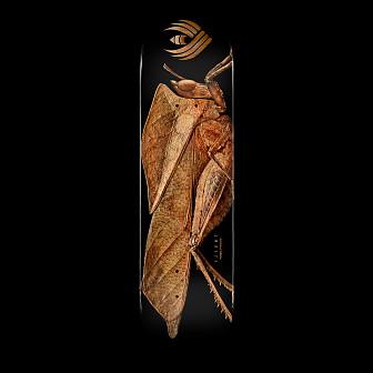 Powell Peralta Flight® Skateboard Deck BISS Leaf Grasshopper - Shape 249 - 8.5 x 32.08