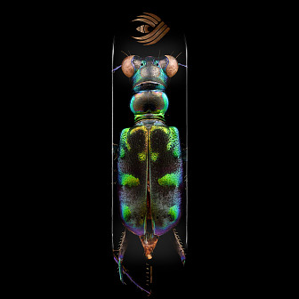 Powell Peralta Flight® Skateboard Deck BISS Tiger Beetle - Shape 248 - 8.25 x 31.95