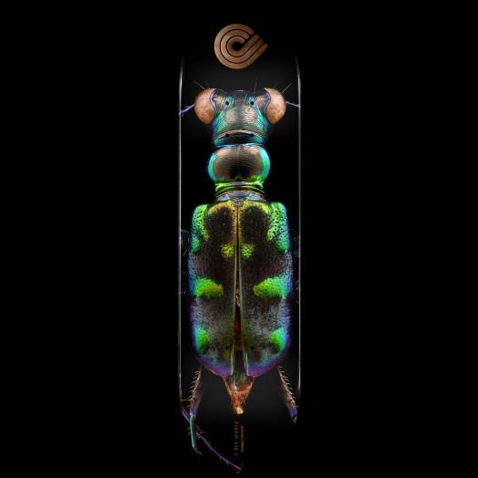 Powell Peralta BISS Tiger Beetle Blem Skateboard Deck - 8.25 x 31.95